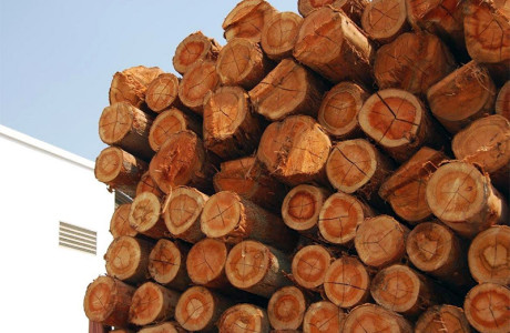 Toras para serraria, Postes em madeira, Toras de eucalipto